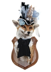 Anthropomorphic Taxidermy Art Fox Lady with Ship Hat by Lucia Mocnay
